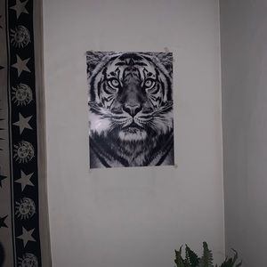 Two lion posters